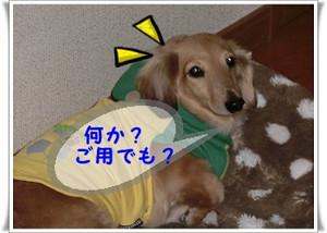 Cimg0294_640x480_3